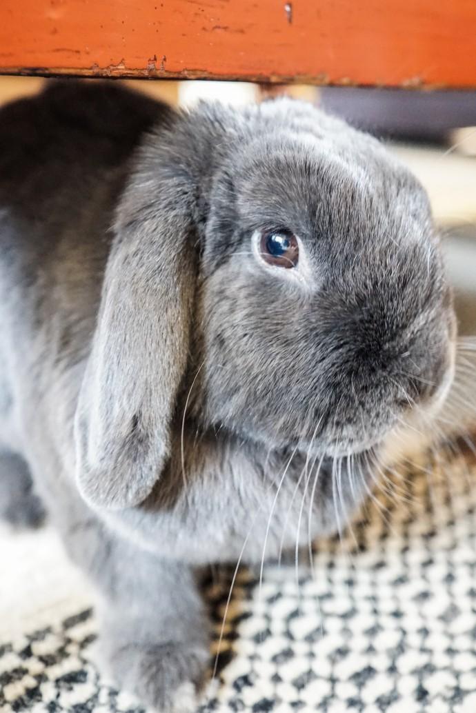 cute rabbit on www.engagingwomen.com.au